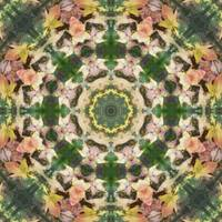 Leaves Memory Kaleidoscope 5
