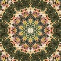 Leaves Memory Kaleidoscope 13