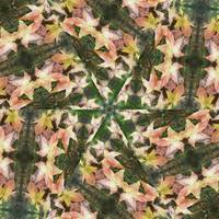Leaves Memory Kaleidoscope 16