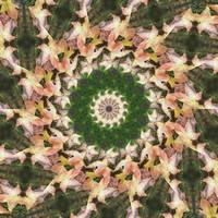 Leaves Memory Kaleidoscope 21