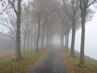 Misty lane in Holland