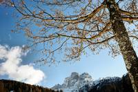 Admiring dolomiti sitting under a tree