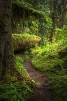 Hoh River Trail II by Joshua Cramer
