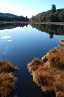 New Zealand - Marsh Reflection in lake