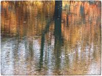 Reflections at Radnor Lake by Giorgetta Bell McRee