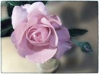Vintage Rose by Giorgetta Bell McRee