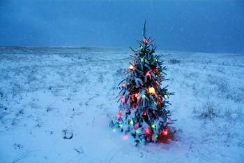 Cape Cod Christmas Tree on the Beach by Christopher Seufert
