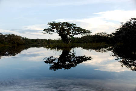 Reflection on Lago Grande, Amazon Jungle
