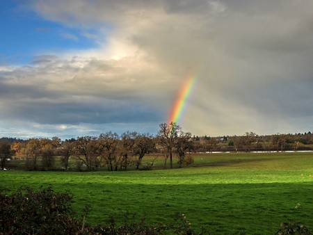 Pot of Gold by Richard Thomas