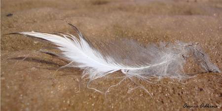 Riverbed Feather