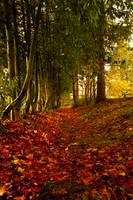 Gone with Leaves by Joshua Cramer
