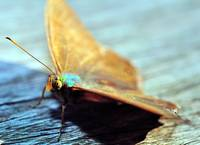 Colourful Moth