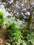 Koolau Mountain Trail