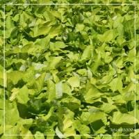 salade Art Prints & Posters by Teodoro Noir