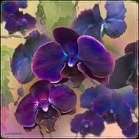 Purple Dreams by Giorgetta Bell McRee