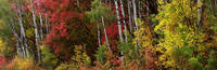 Autumn Foliage Panorama by David Kocherhans