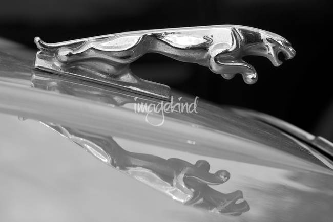 Jaguar Car Hood Ornament Reflection BW