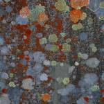 Gravestone Lichens 2 Morvich burial Ground Prints & Posters