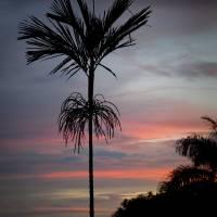 Sunset Sentinel by Jen Wheeler