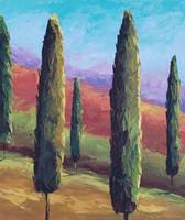 Cypress Tree Landscape