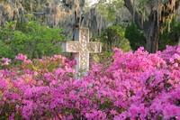 Old marble cross with flowering azaleas