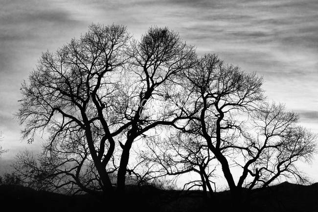 Dancing Forest Trees In Black and White