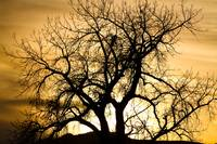 Golden Tree Sunset Silhouette