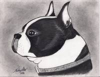 Boston Terrier Charcoal art