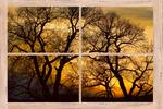 Dancing Trees Sunset Picture Window Frame Photo Ar