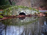 The Pond Bridge by Kristen Stein