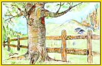 Old Tree by Rail Fence