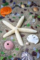 Starfish beach still life