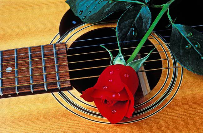 Guitar with single red rose