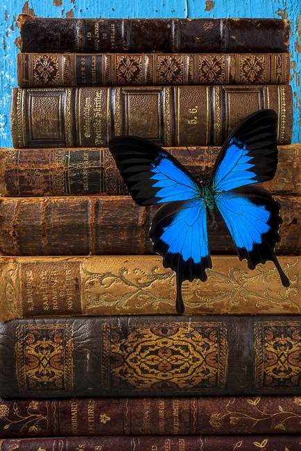 Butterfly and old books