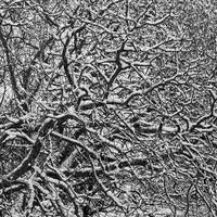 Winter Snow Abstract