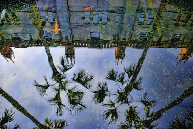Koi pond reflection, Lightner Museum, St Augustine