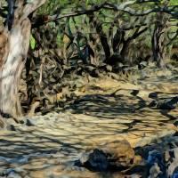 Keawe Hiking Trail Art Prints & Posters by Don Bloom
