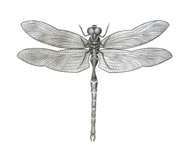 Dragonfly by patrick walsh