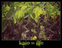 Kalo is Life