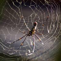 Itsy Bitsy Spider by Jen Wheeler