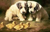 Sealyham Puppies and Ducklings