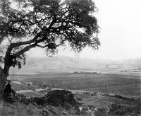 Overlooking Santa Clara Valley c1890 by WorldWide Archive