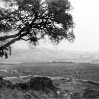 """Overlooking Santa Clara Valley c1890"" by worldwidearchive"