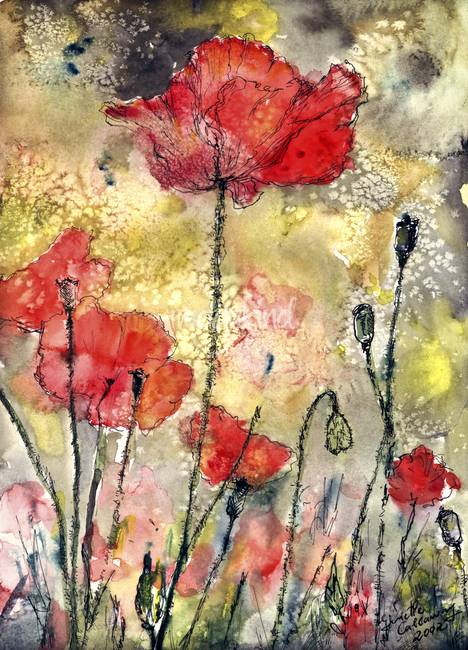 Red Poppies Botanical Watercolor and Ink by Ginett