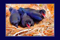 Angry Birds: Juvenile ravens