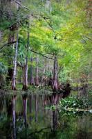 Wild Florida - Hillsborough River by Carol Groenen