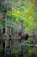 Wild Florida - Hillsborough River