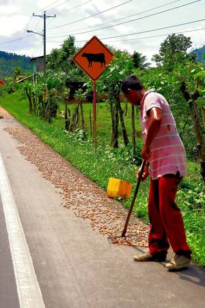 Drying Cacao on the Side of the Highway