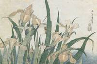 Iris Flowers and Grasshopper, c.1830-31 (colour wo