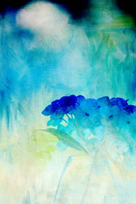 Painterly Hydrangeas